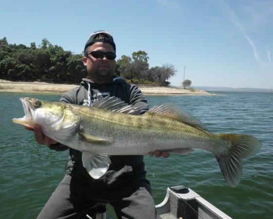 pêche au gros sandre